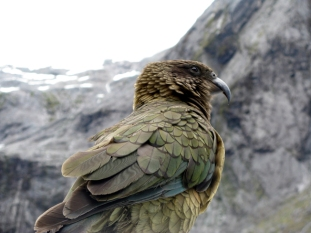 faune flore nouvelle zelande