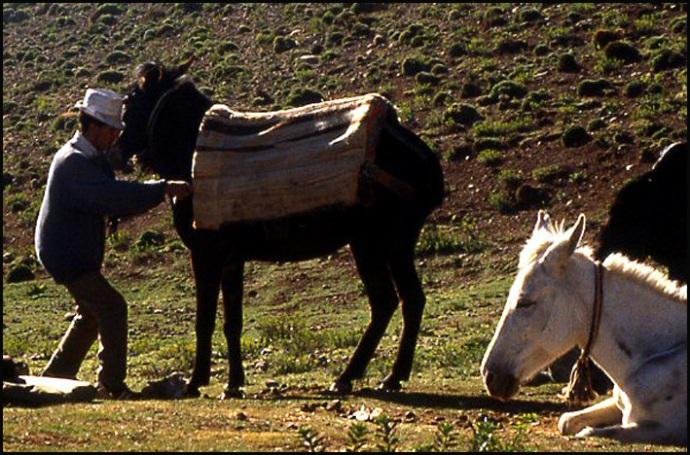 Randonnée dans le Haut Atlas central ; rencontre avec les Berbères au Maroc 7