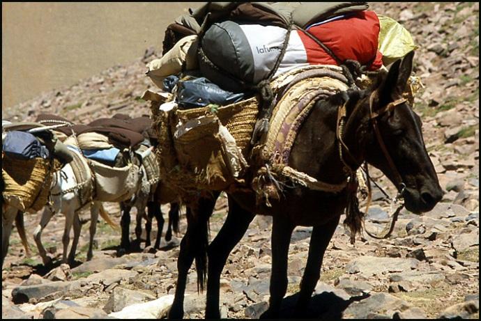 Randonnée dans le Haut Atlas central ; rencontre avec les Berbères au Maroc 30