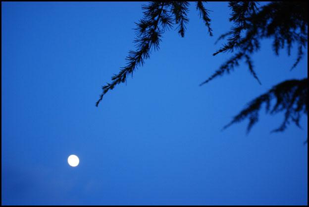 lune et pin