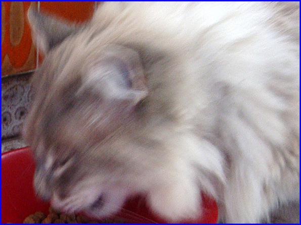 Noir Dick dГ©truisant blanc chatte