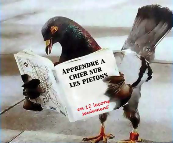 pigeon apprenant