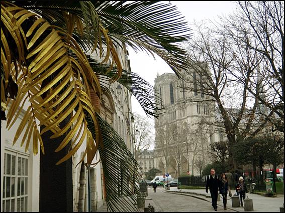 palmier de notre dame paris