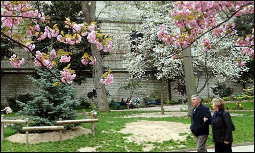 cerisiers en fleurs Paris polytechnique