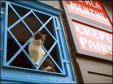 chat Paris rue de la harpe