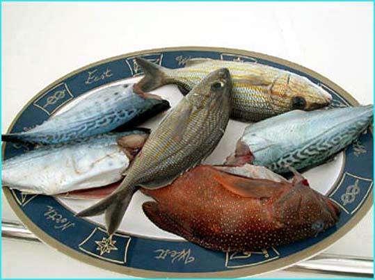 poissons sur assiette