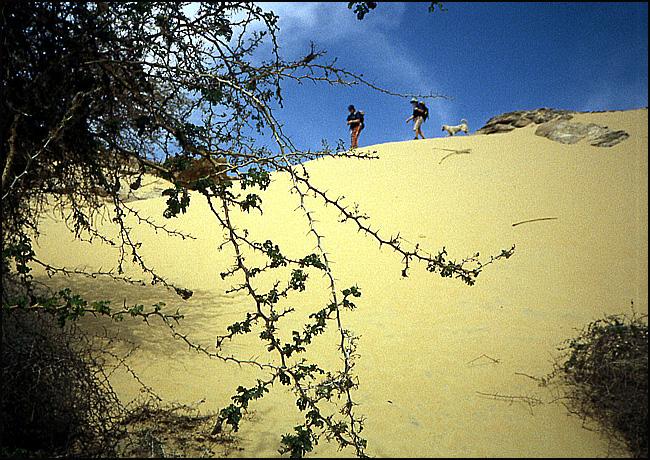 bord du désert egypte