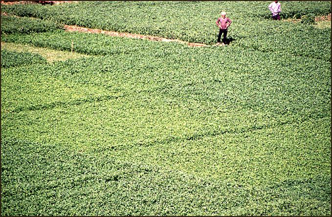 champs de ble bord du nil
