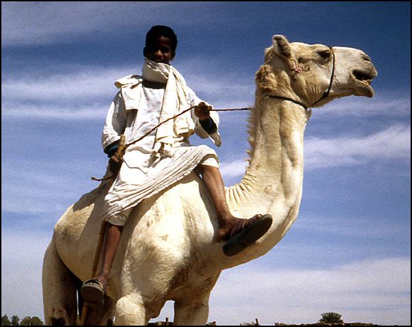 gamin sur chameau Egypte
