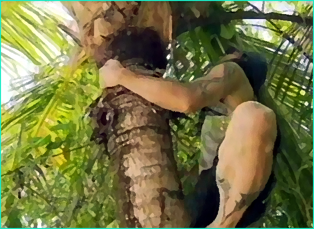 grimper au cocotier