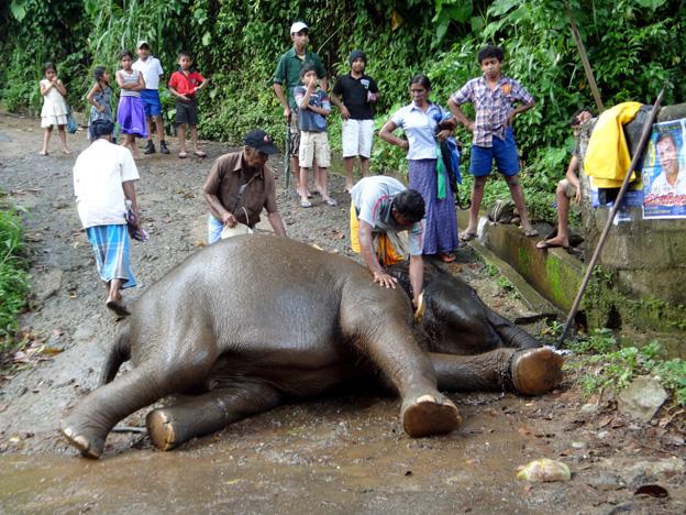 bain elephant sri lanka