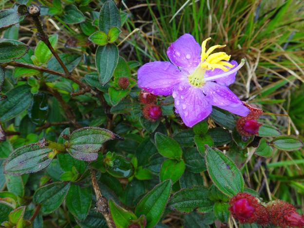 horton plains fleur sri lanka