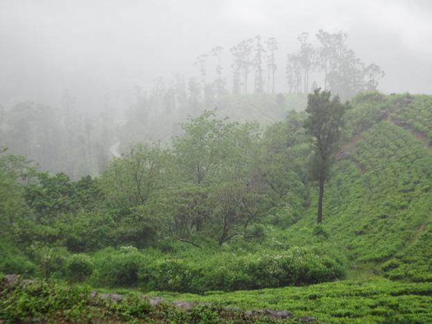 jardins de the sous la pluie sri lanka