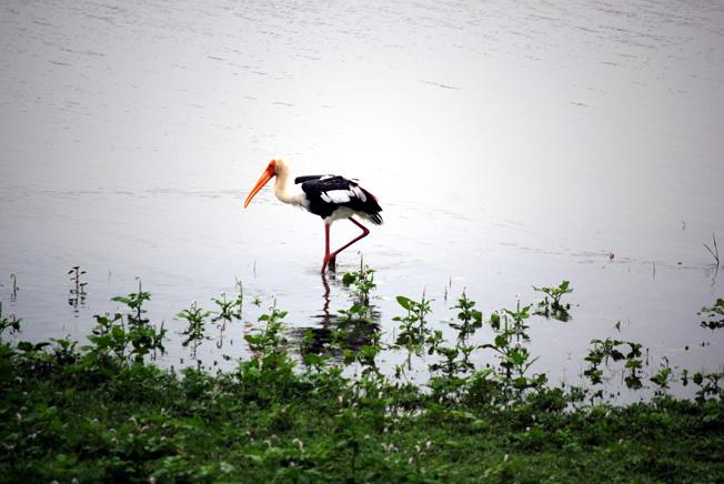 oiseau parc national udawalawesri lanka