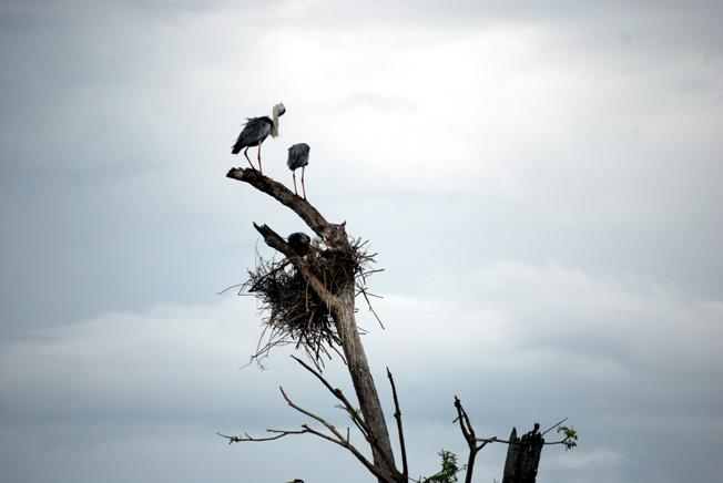 oiseaux parc national udawalawesri lanka