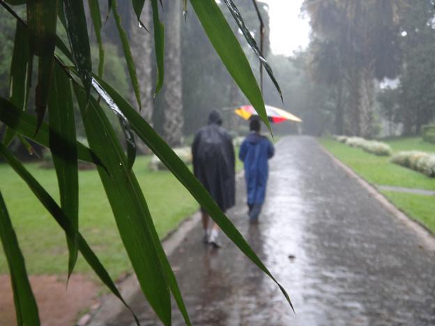 pluie Jardin botanique de Peradeniya sri lanka
