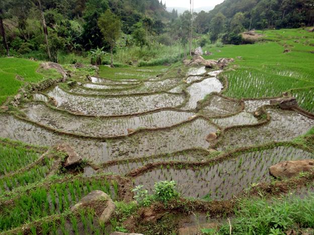 riziere sri lanka
