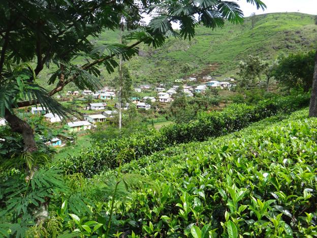 village tamoul haputale sri lanka