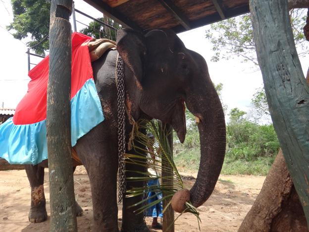 elephant plateforme sri kanka