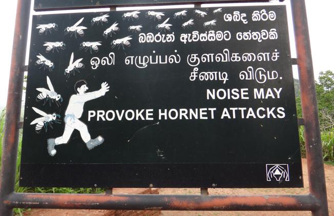 sigiriya hornet attacksri lanka