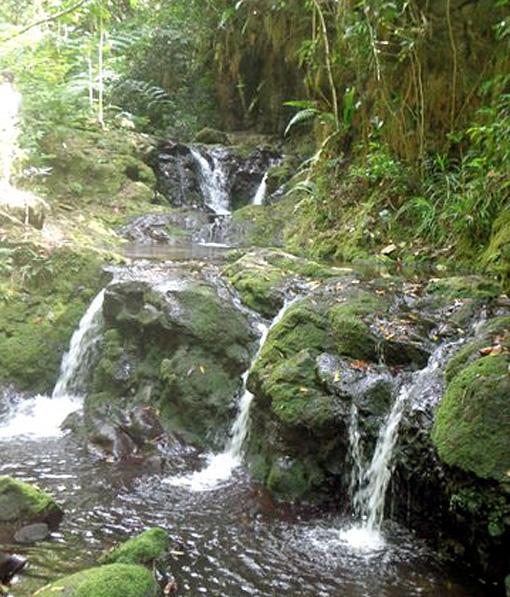 cascade foret tahiti
