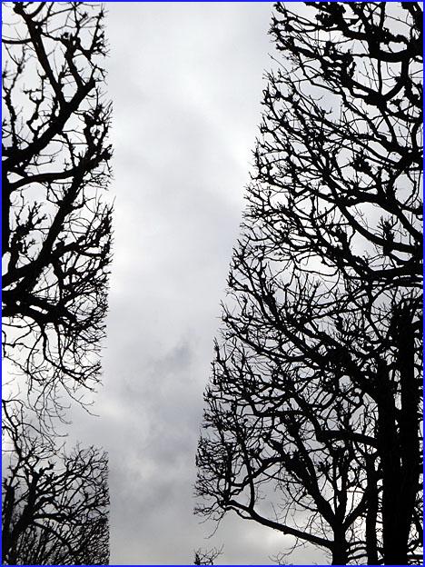 arbres au cordeau