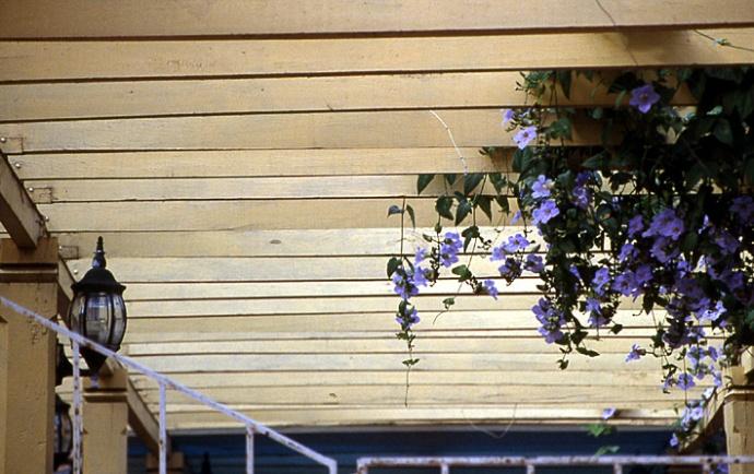 fleurs baracoia cuba