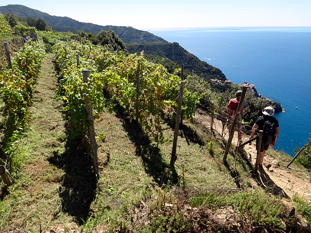 corniglia sentier dans les vignes