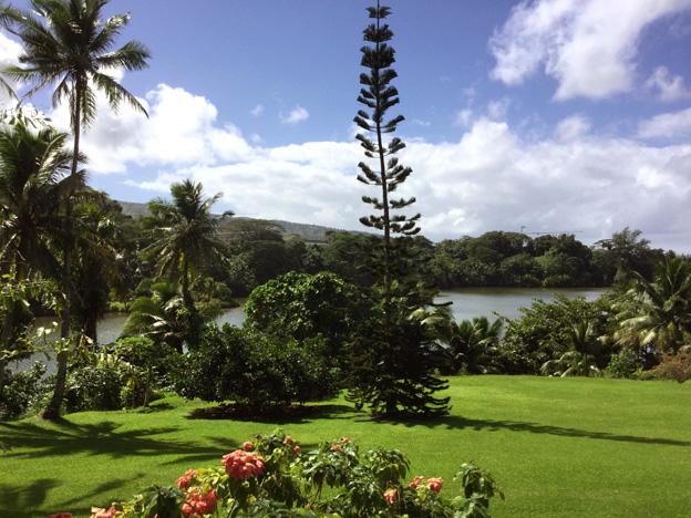 arbre debout tahiti