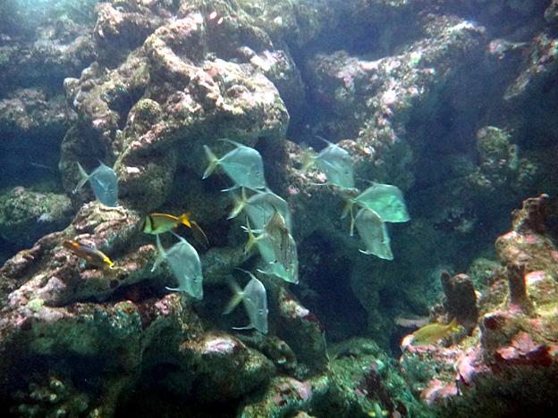 banc de poissons brest oceanopolis