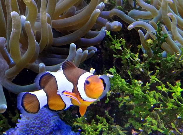 poisson colore brest oceanopolis