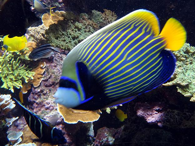 poisson perroquet brest oceanopolis