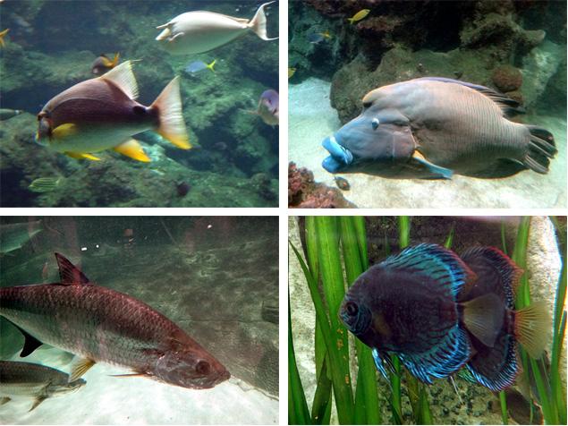 poissons brest oceanopolis