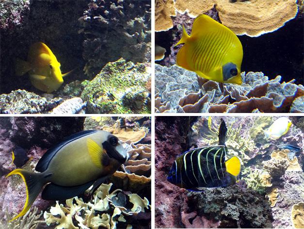 poissons tropicaux brest oceanopolis