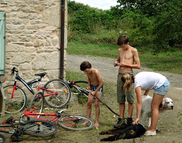 gamins et chiens monts d arree