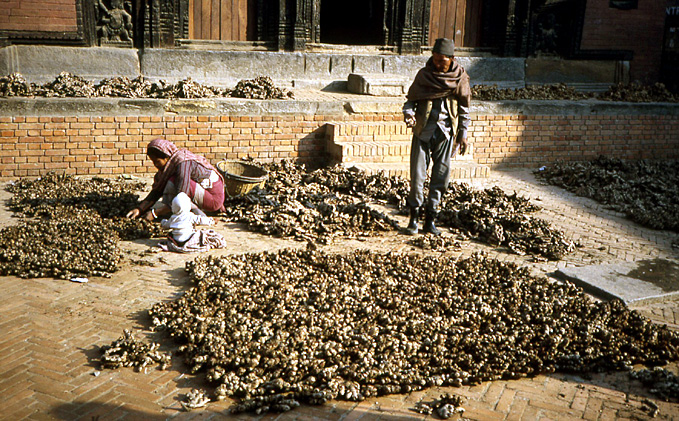bhaktapur nepal sechage de recolte
