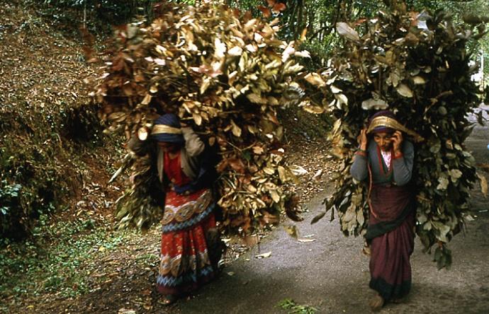 Godawari nepal femmes portant charge