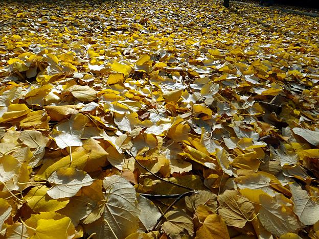 neige doree paris luxembourg automne