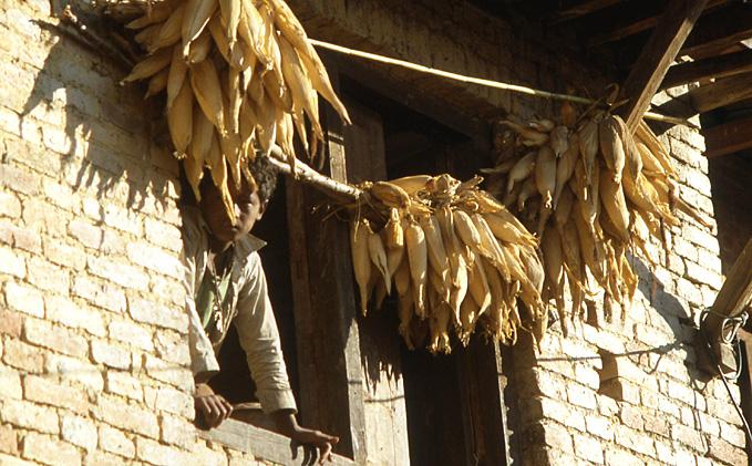 nepal mais seche