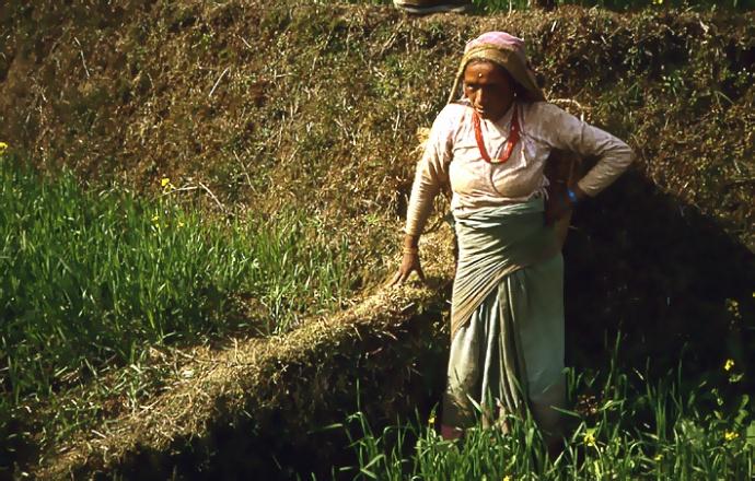 nepal paysanne