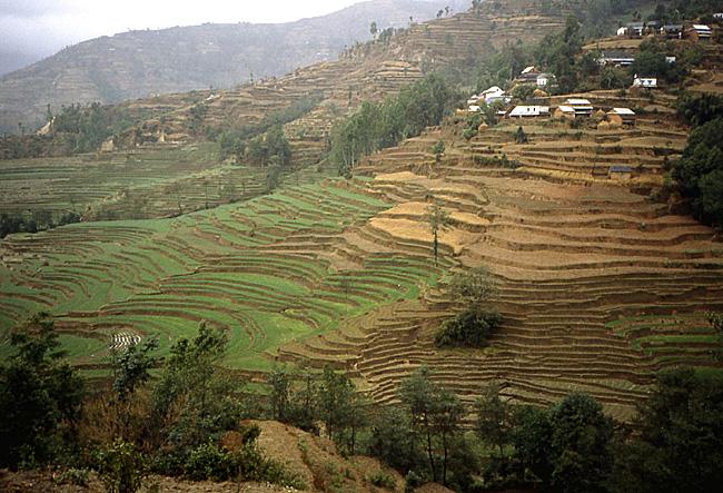 nepal terrasses vers kakani