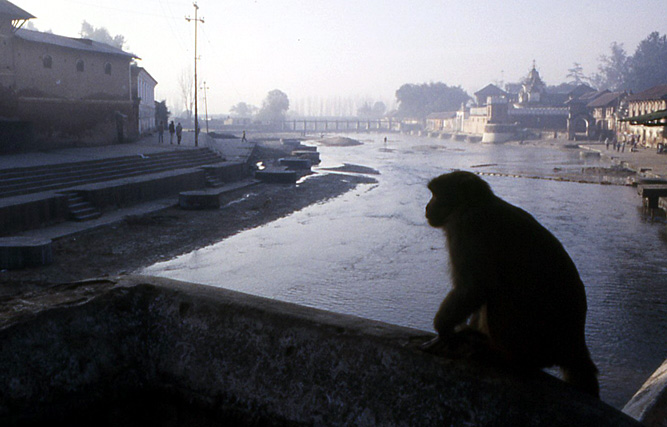 pasupaninath singe au nepal