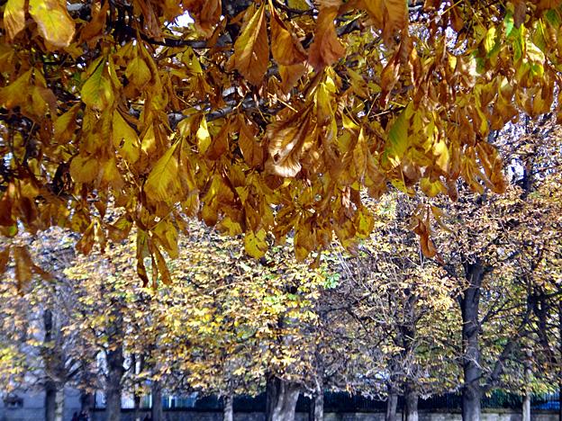 rideau de feuilles paris luxembourg automne