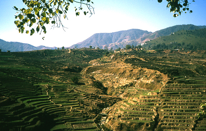 terrasses agricoles nepal