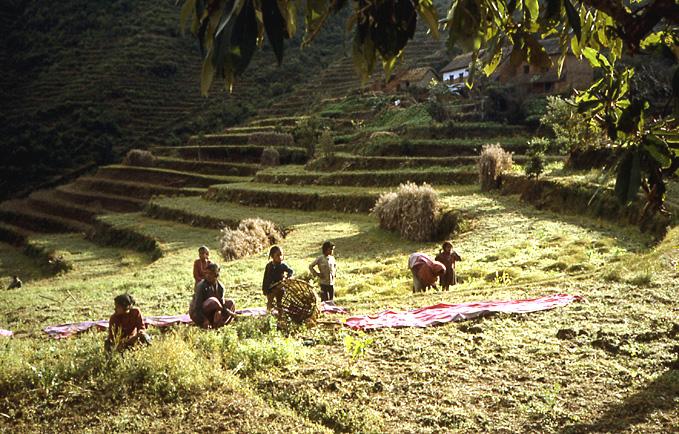 travail aux champs nepal