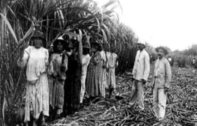 chinois des plantations polynesie