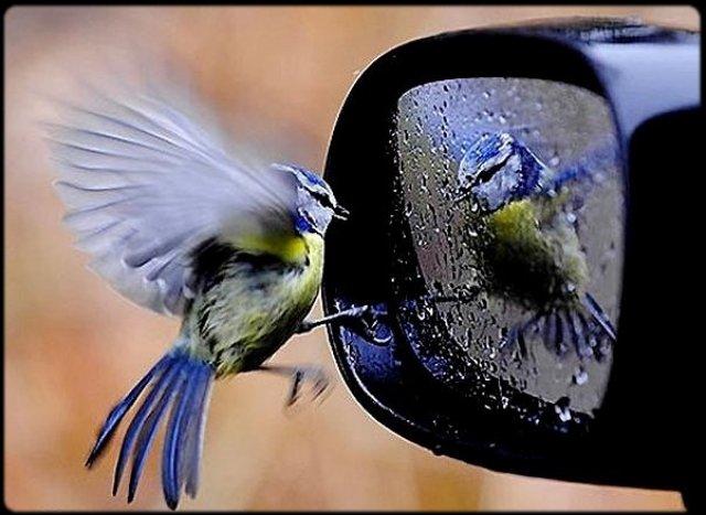 piaf miroir