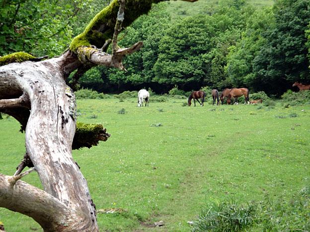 chevaux pature libre