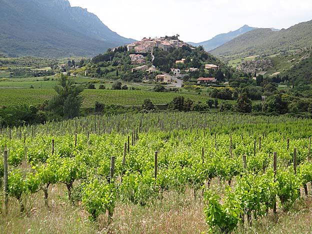 cucugnan vignes et butte castrale