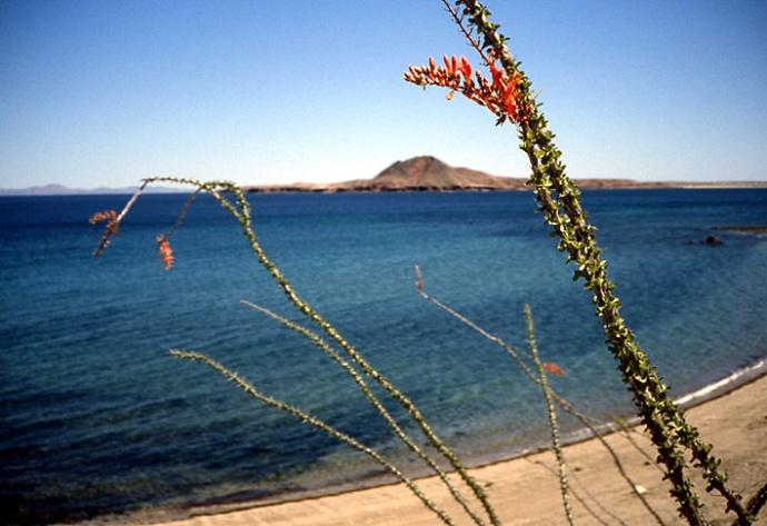 cactus Basse Californie
